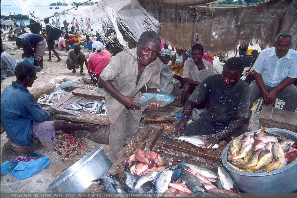 Fish Market, Dar es Salaam, Tanzania.