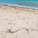 Shoreham Beach - Seaweed